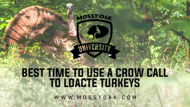 Best Time To Make a Turkey Gobble with a Crow Call