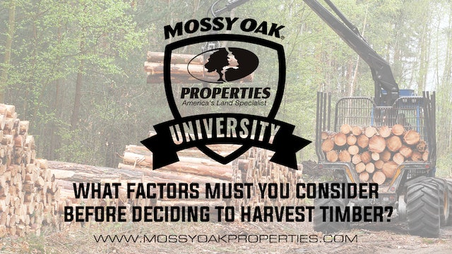 What Factors Must You Consider Before Deciding To Harvest Timber