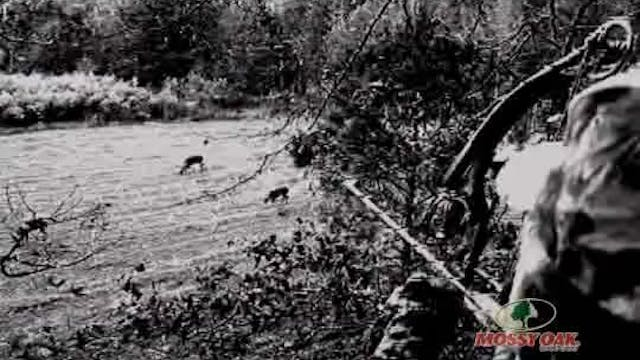 Calling All Critters • Whitetail Hunt...