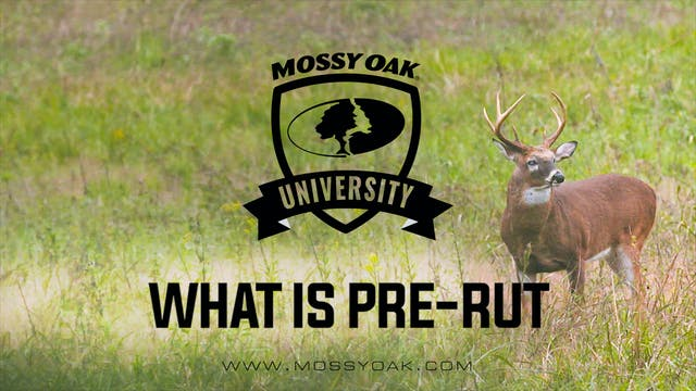 What Is Pre-Rut | Signs Of Pre-Rut