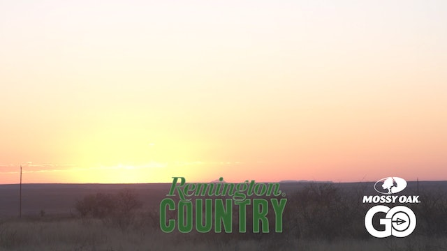 Lone Star Sheep • Remington Country