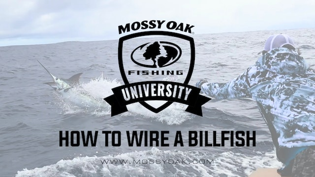 How to Wire a Billfish • Mossy Oak University