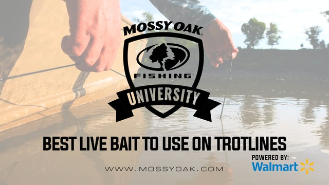 Best Live Bait To Use On A Trotline • Mossy Oak University