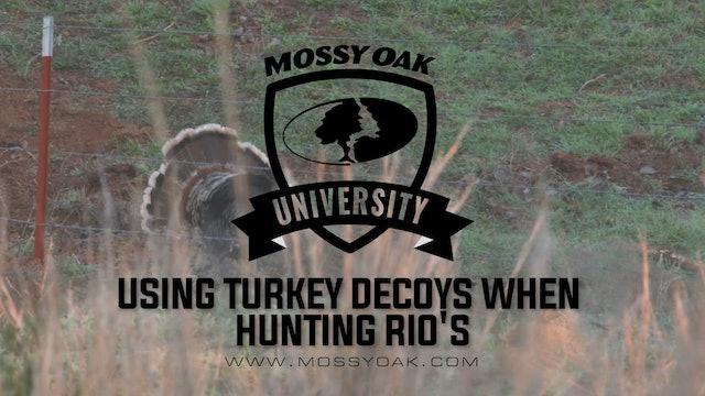 Using Turkey Decoys When Hunting Rios