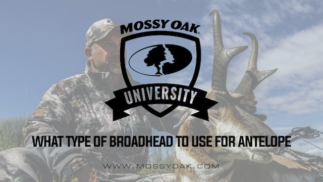 What Type of Broadhead To Use For Antelope