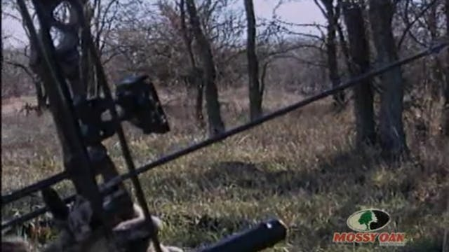 Grounded in Texas • Bowhunting Bucks ...