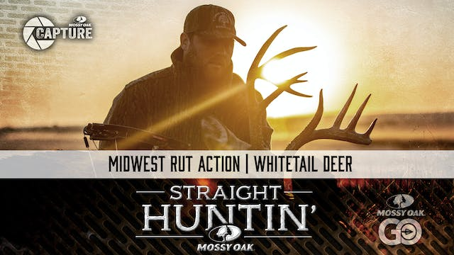 Midwest Rut Action • Whitetail Deer •...