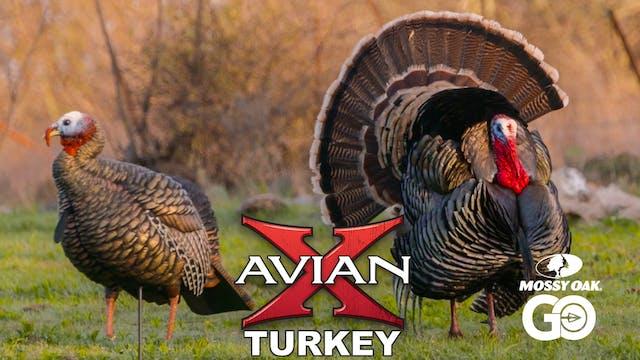 Record Year • Avian X