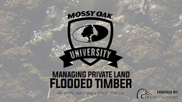 How to Manage Flooded Timber | Property Management