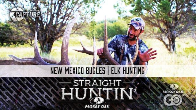New Mexico Bugles • Elk Hunting • Str...