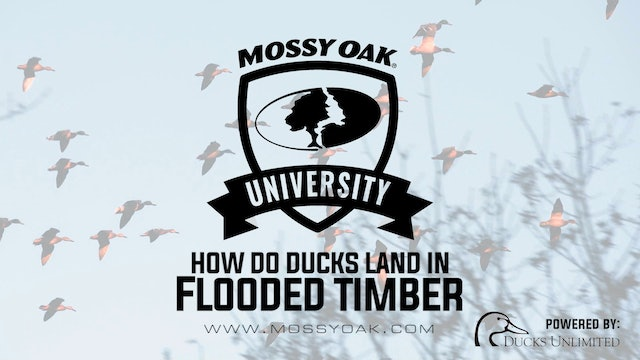 Ducks in Flooded Timber - Waterfowl Habitat