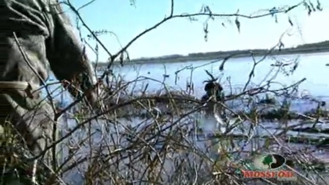 Mississippi Delta Ducks • Flooded Field Hunting for Waterfowl