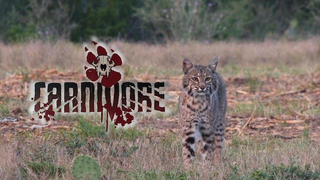 South Texas Predators • Carnivore