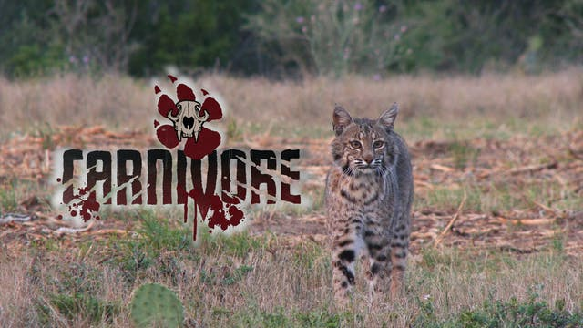 South Texas Predators • Carnivore
