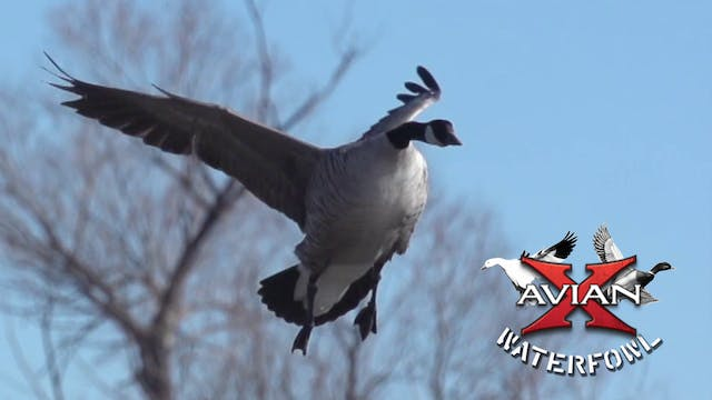PTO • Avian X Waterfowl