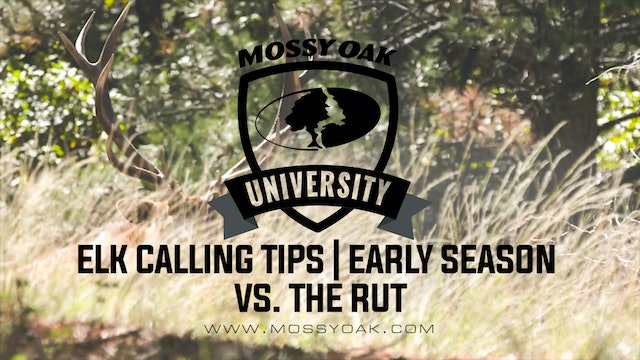Calling Elk Early Season v Rut