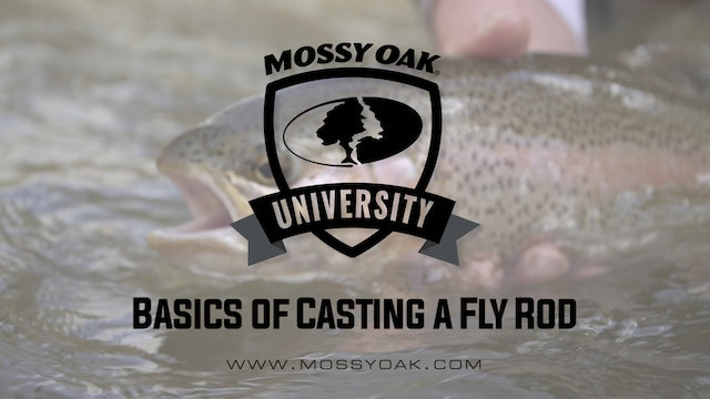Basics of Casting a Fly Rod