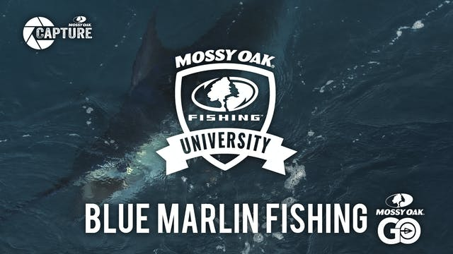 Blue Marlin Fishing • Mossy Oak University