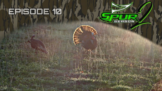 Florida Youth: OH Gobbler • Spur Season