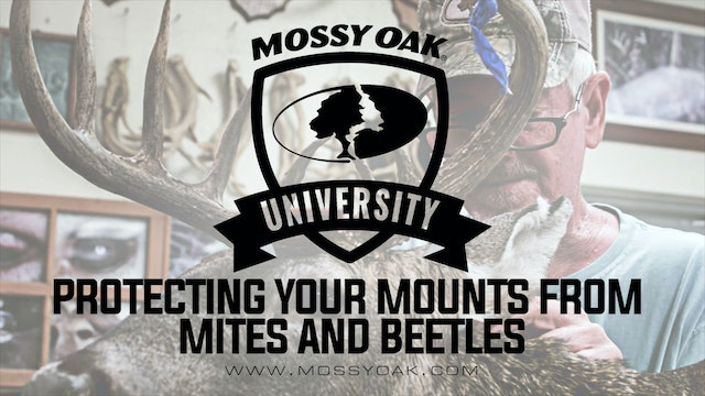 Protecting Your Mounts From Mites and Beetles