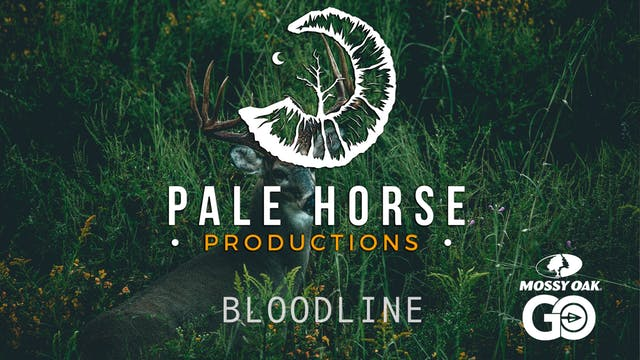 Bloodline • Pale Horse