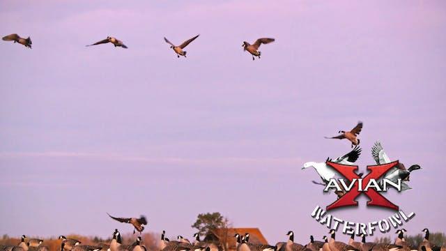 Neverland • Avian X Waterfowl
