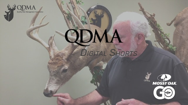Vomeronasal Organ Info • QDMA Shorts.mp4