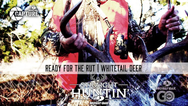 Ready for the Rut • Whitetail Deer • ...