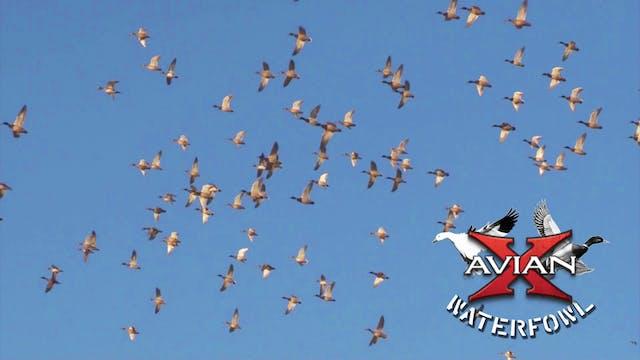 Field of Dreams • Avian X Waterfowl