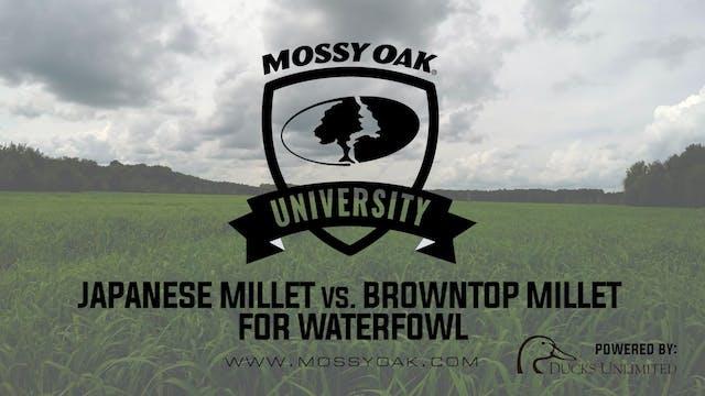 Planting Japanese Millet vs. Browntop...