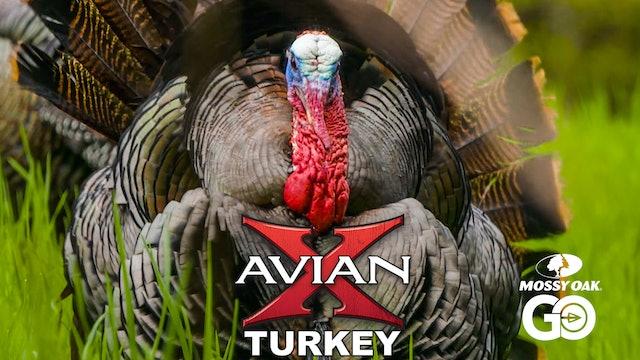 Born Hunter • Avian X