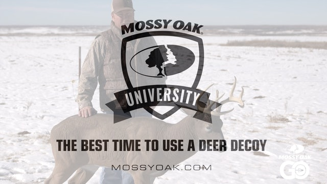 Best Time to Use a Decoy • Mossy Oak University