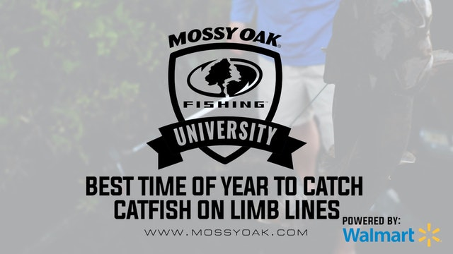 Best Time of Year to Set Limb Lines for Big Catfish
