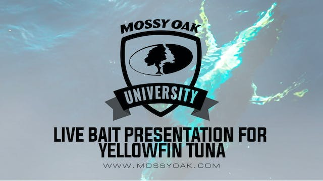 Best Live Bait Presentation • Yellowf...