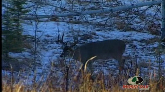 Big Canada Whitetails • Massive Deer in Saskatchewan