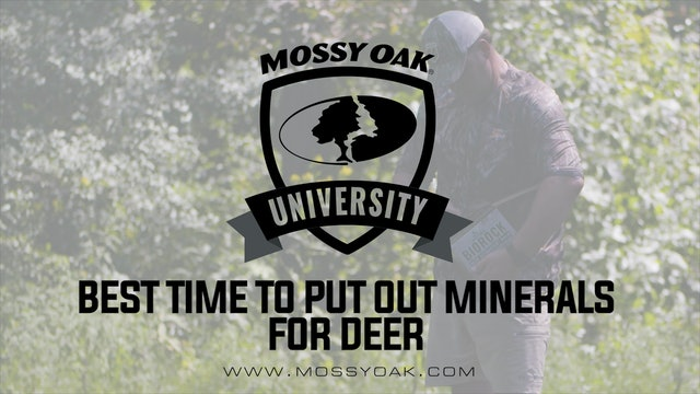 Deer Minerals • When to Establish Mineral Sites for Whitetail Deer