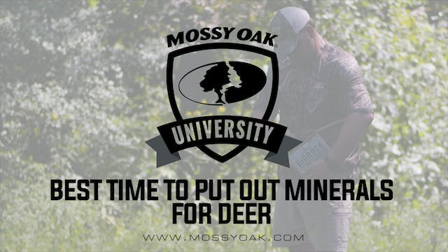 Deer Minerals • When to Establish Min...