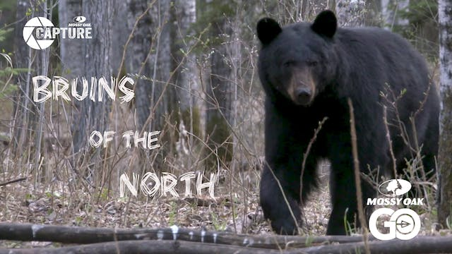 Bruins of the North