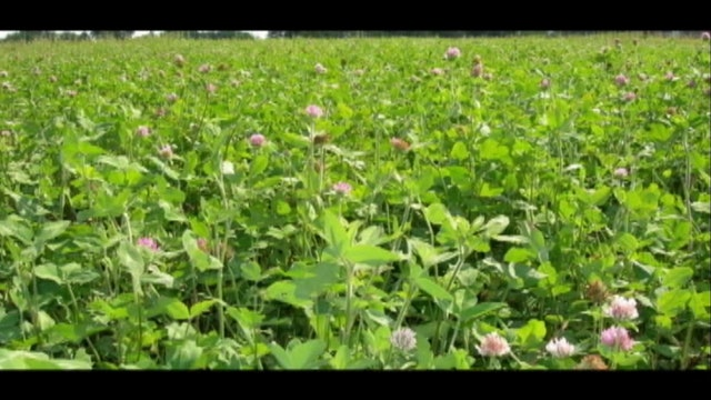 The Food Plot Dude • Mossy Oak's Todd Amenrud Talks Food Plot Maintenance