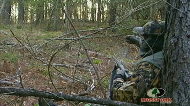 Opening Day Turkeys • Gobblers on the Limb