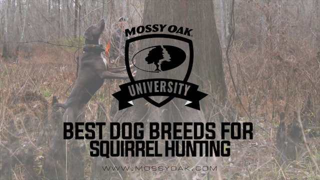 Best Breed Of Dog For Squirrel Hunting