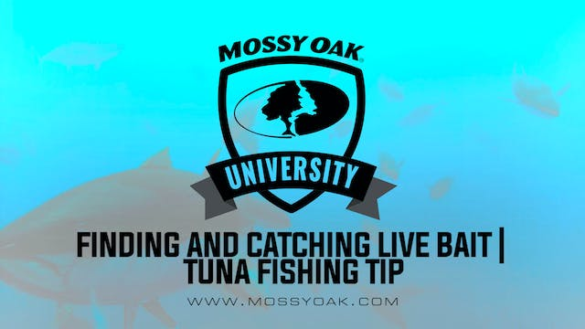 How to Catch Live Bait for Tuna