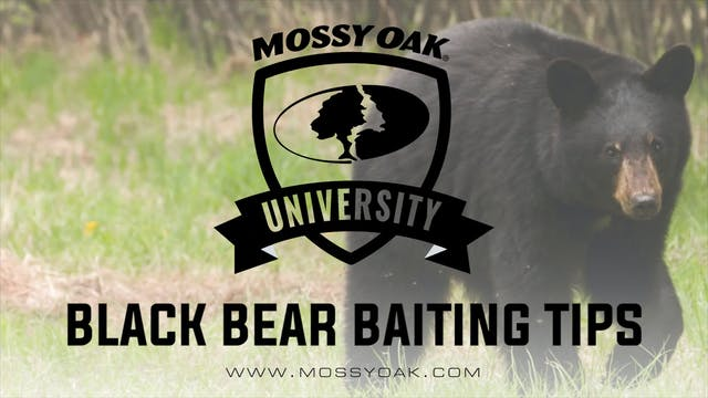 Black Bear Baiting Tips and Tricks