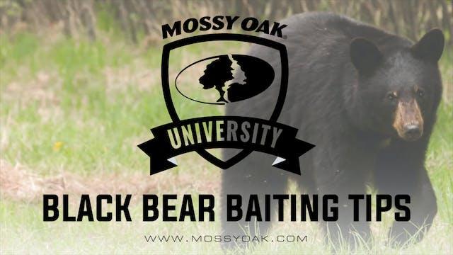 Black Bear Baiting Tips and Tricks