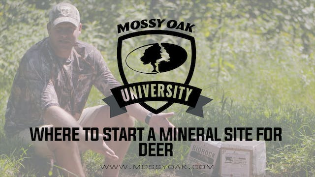 Where to Start a Mineral Site for Deer