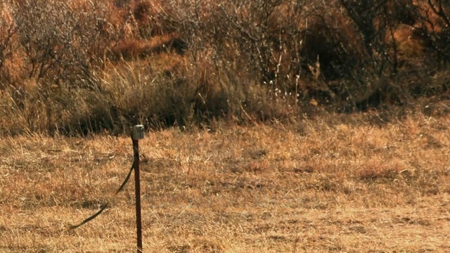 A Redefined Life • Whitetails in Oklahoma