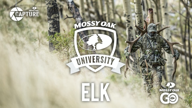 Elk • Mossy Oak University