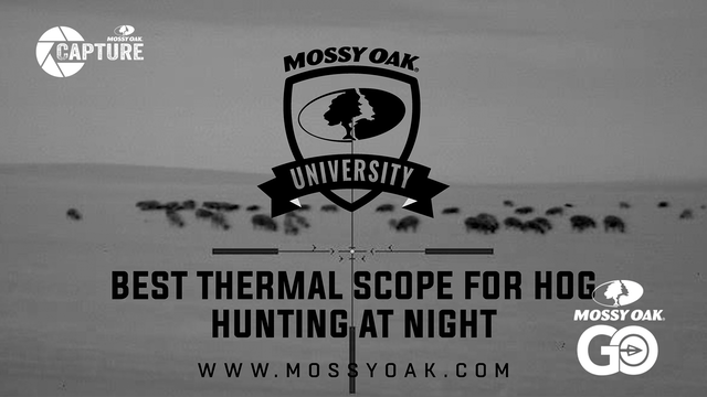 Best Scope For Hog Hunting With Thermal Night Vision.Mp4