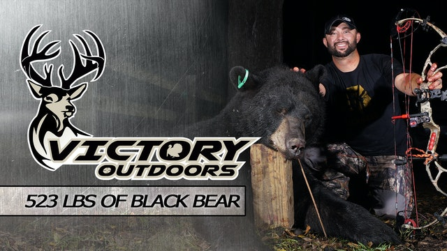 523lbs of Black Bear • Victory Outdoors