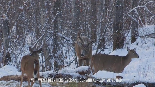 Glassing, Ranging, Scoping, Freezing • Whitetail in Canada